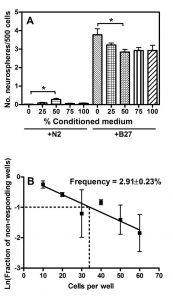 Laminin enhances the growth of human neural stem cells in defined culture media.